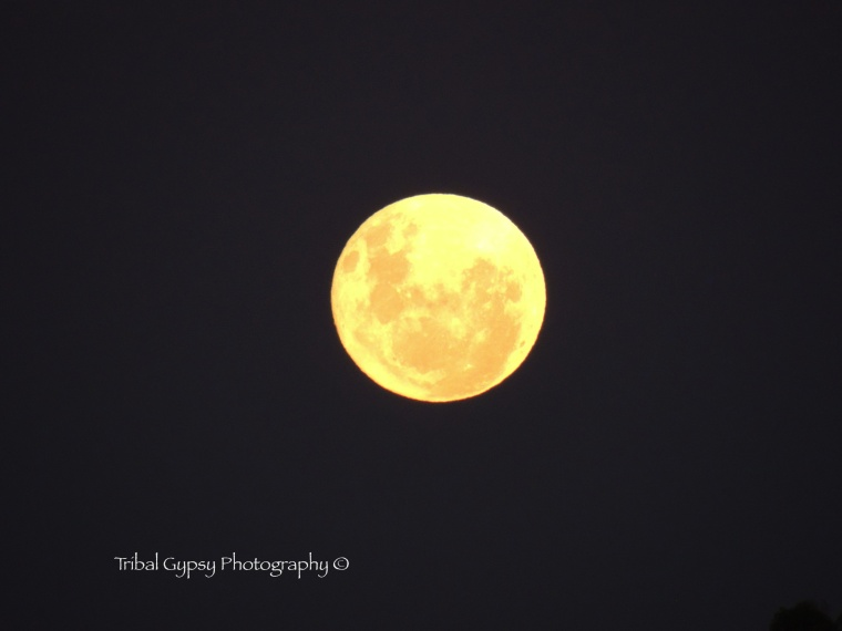 First full moon January 2013. Moon in Leo.